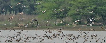 Sultanpur National Park and Bird Sanctuary