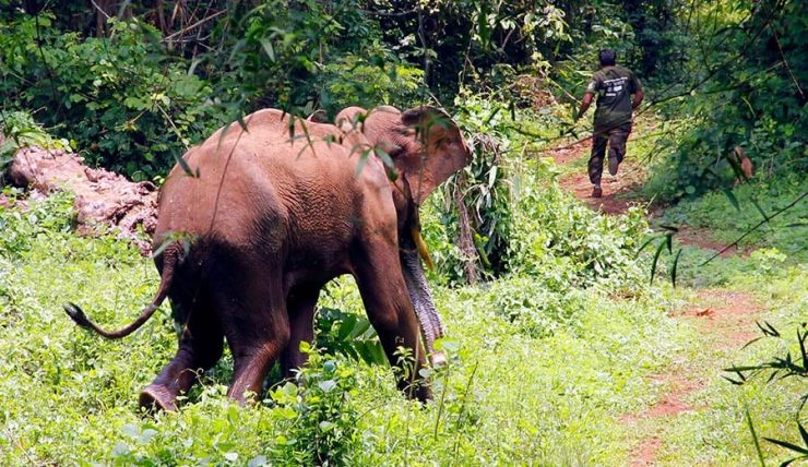 Kodanad Elephant Training Centre and Sanctuary - Reaching there - About